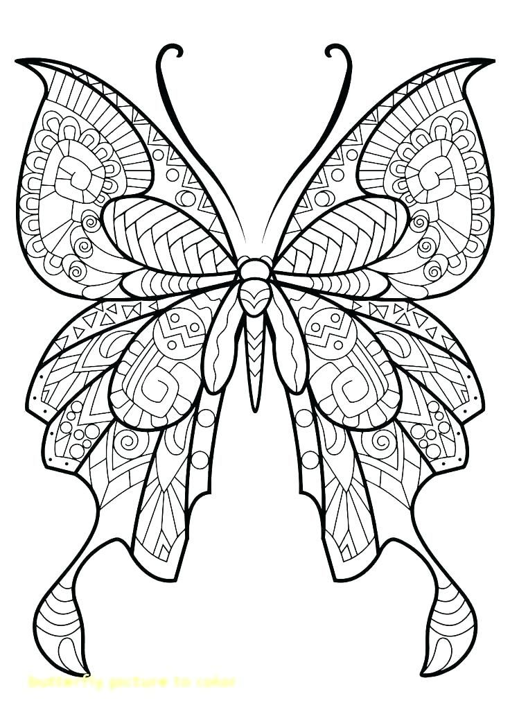 Free Printable Butterfly Coloring Pages Free Printable Butterfly Coloring Pages For Butterfly Pictures To Color Butterfly Coloring Page Mandala Coloring Pages