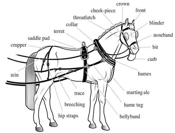 horse  u0026 harness components
