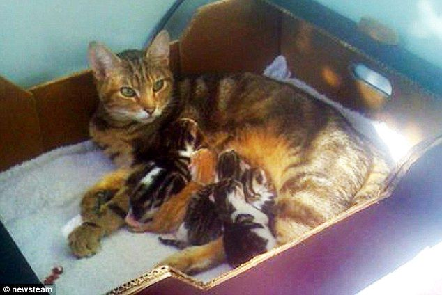 Call The Spin Doctor Stray Cat Gives Birth To Litter Of Kittens