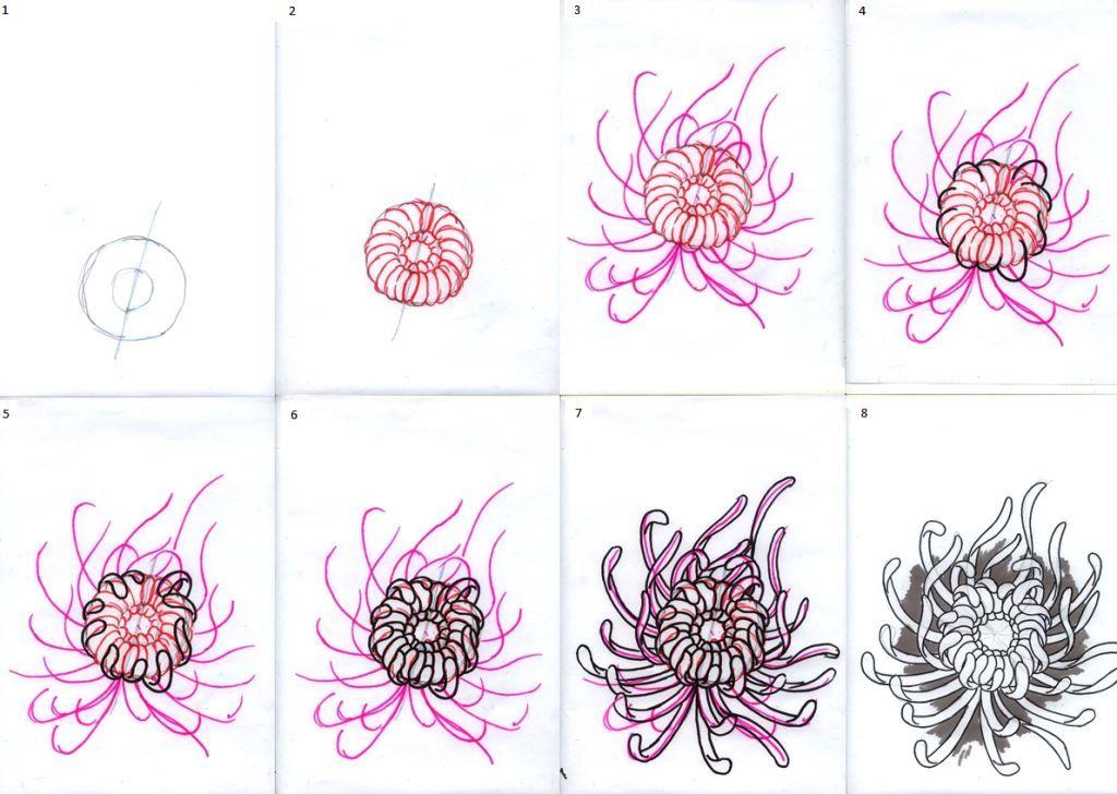 Chrysanthemum Flowers Tutorial Flower Drawing Chrysanthemum Drawing Art Lessons