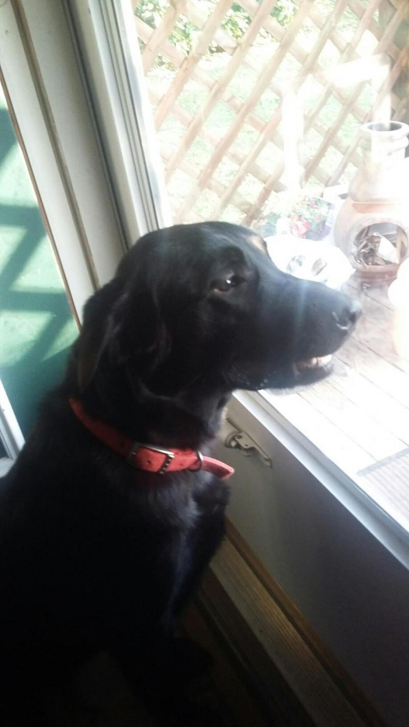 Puppy rescue dayton ohio