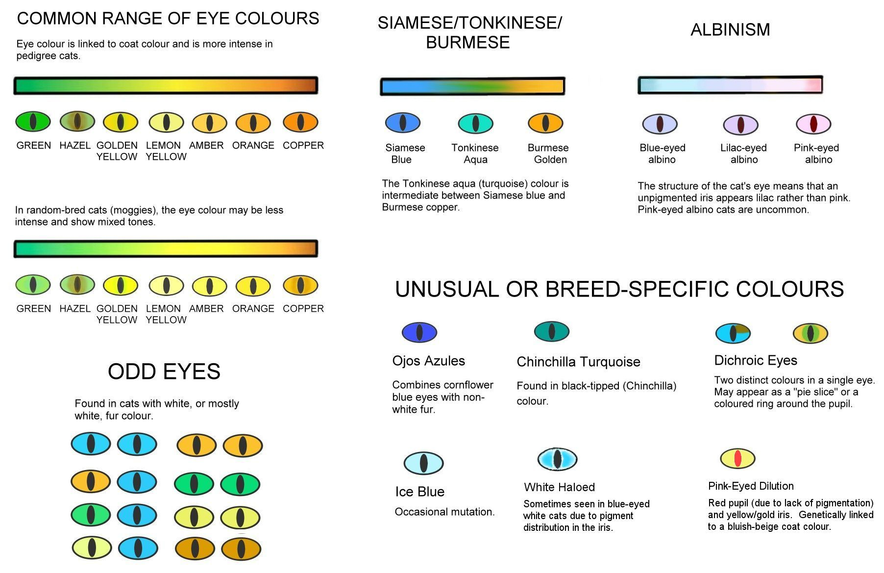 Eye Colours Cat Eye Colors Eye Color Chart Cat Colors