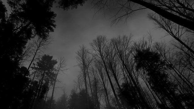 Https Ortdermacht Tumblr Com Post 184902279189 Dark Landscape Dark Wallpaper Dark Aesthetic