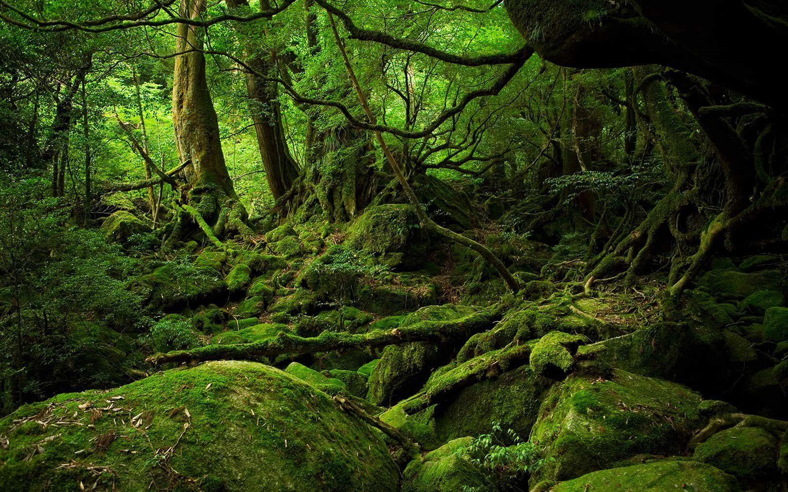 30+ Tree bathing in japan ideas in 2021