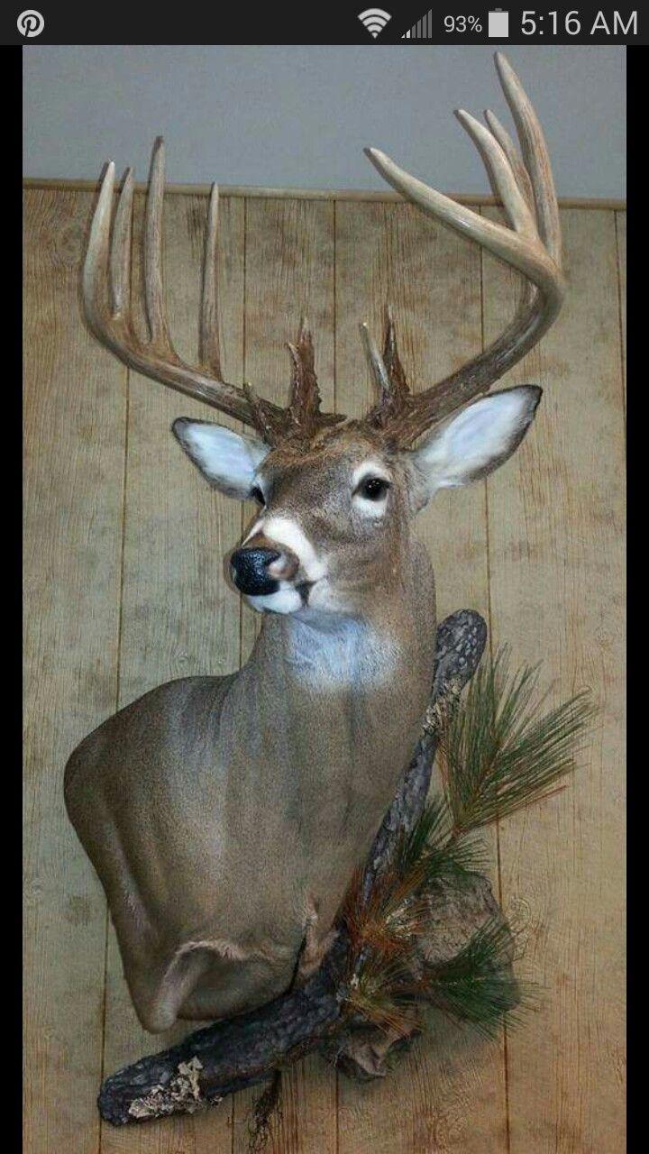 Deer skull mount ideas - The Deer That I Shot Mabey