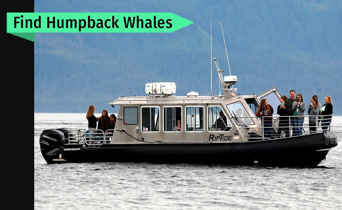 Alaska Galore Whale watching tours
