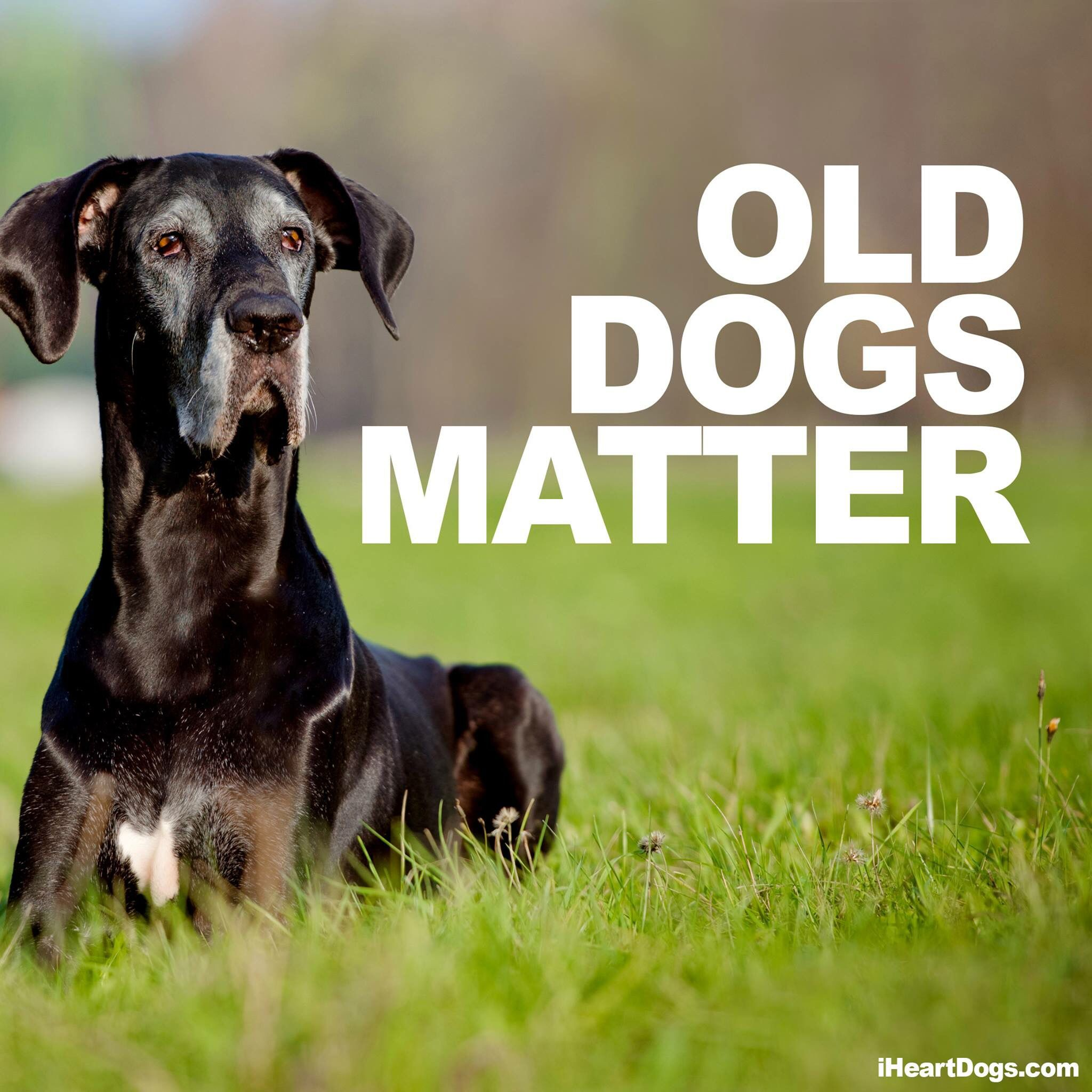 All Old Animals Matter Dogs Old Dogs Dog Quotes