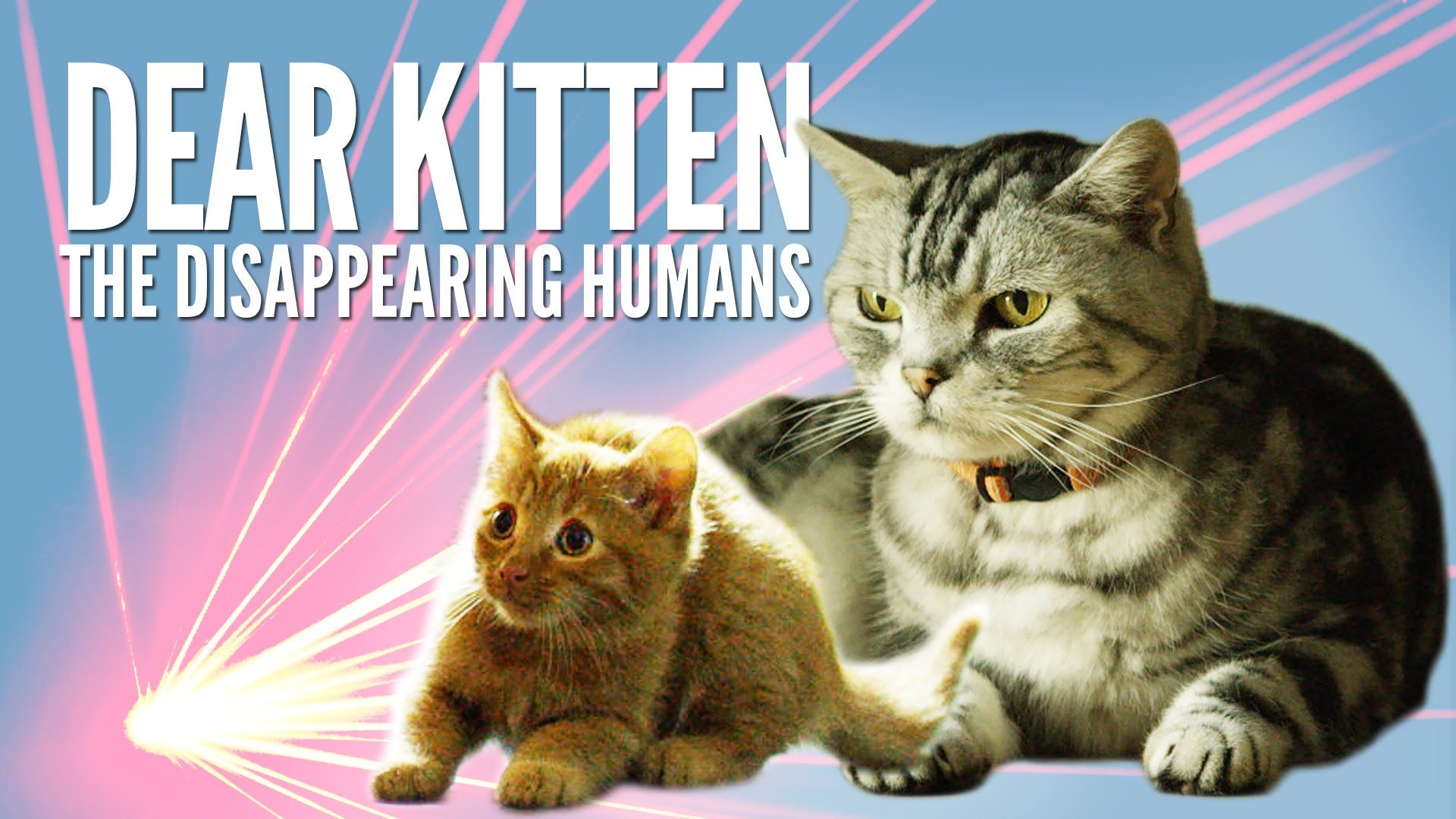 Dear Kitten The Disappearing Humans Purina Friskies Animal Antics Kitten Purina Friskies