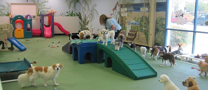 Doggie Daycare Wags Wiggles Dog Daycare Laurie Zurboro