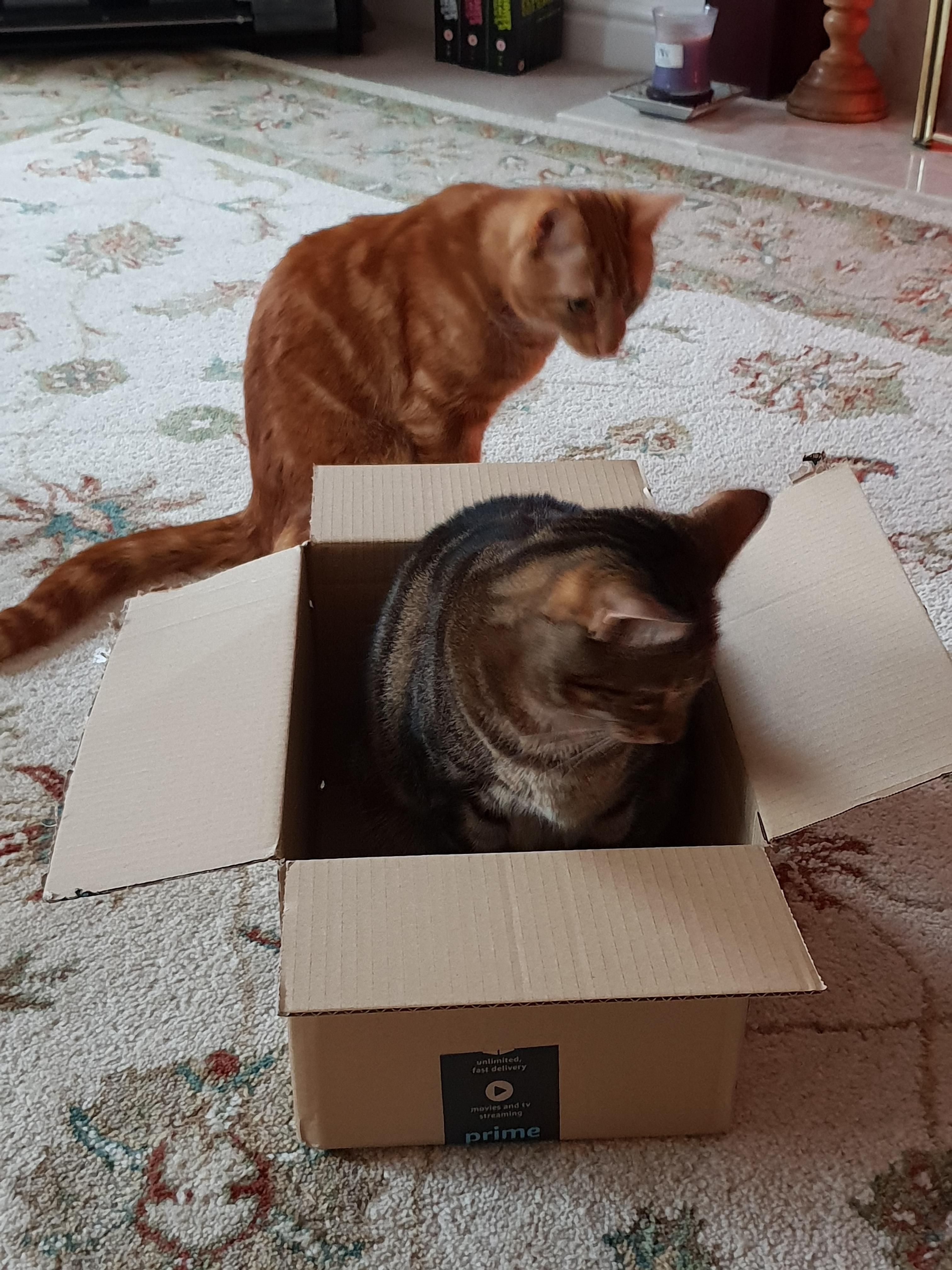 Cat trap is working cat traps cats crosley turntable