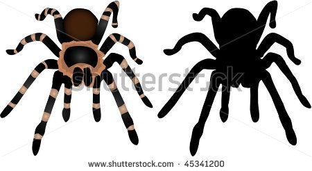 tarantula silhouette clip art bing images halloween pinterest rh pinterest com red knee tarantula clipart tarantula clipart free