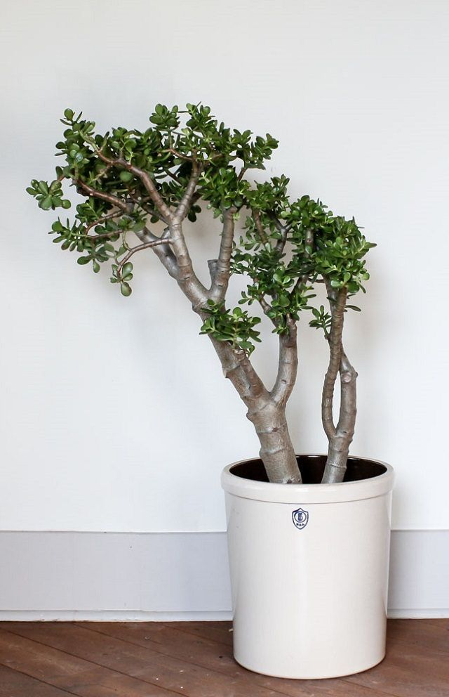 Take a look at these 19 Best low-maintenance houseplants, if you ...