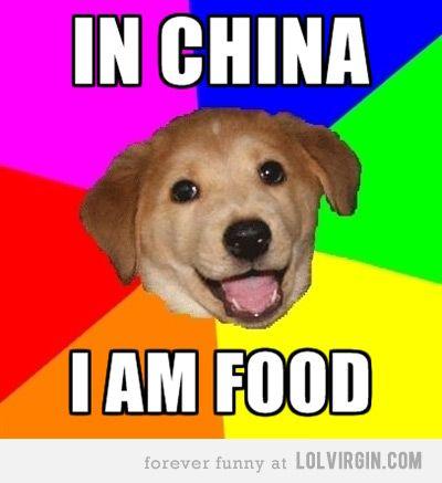 cd1dd733fe6889ff5c46cae75be4709c in china, i am food advice dog meme dork stuff, if you don't