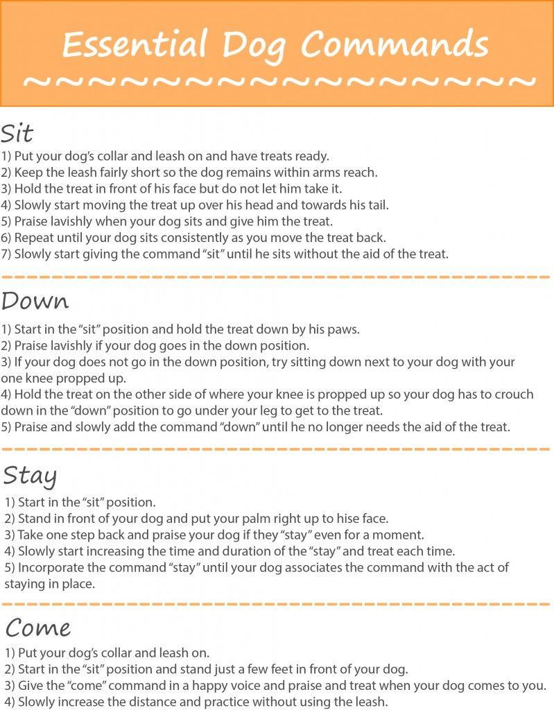 Your Fuzzy Friend Cat Tips For Owners Dog Commands Dog