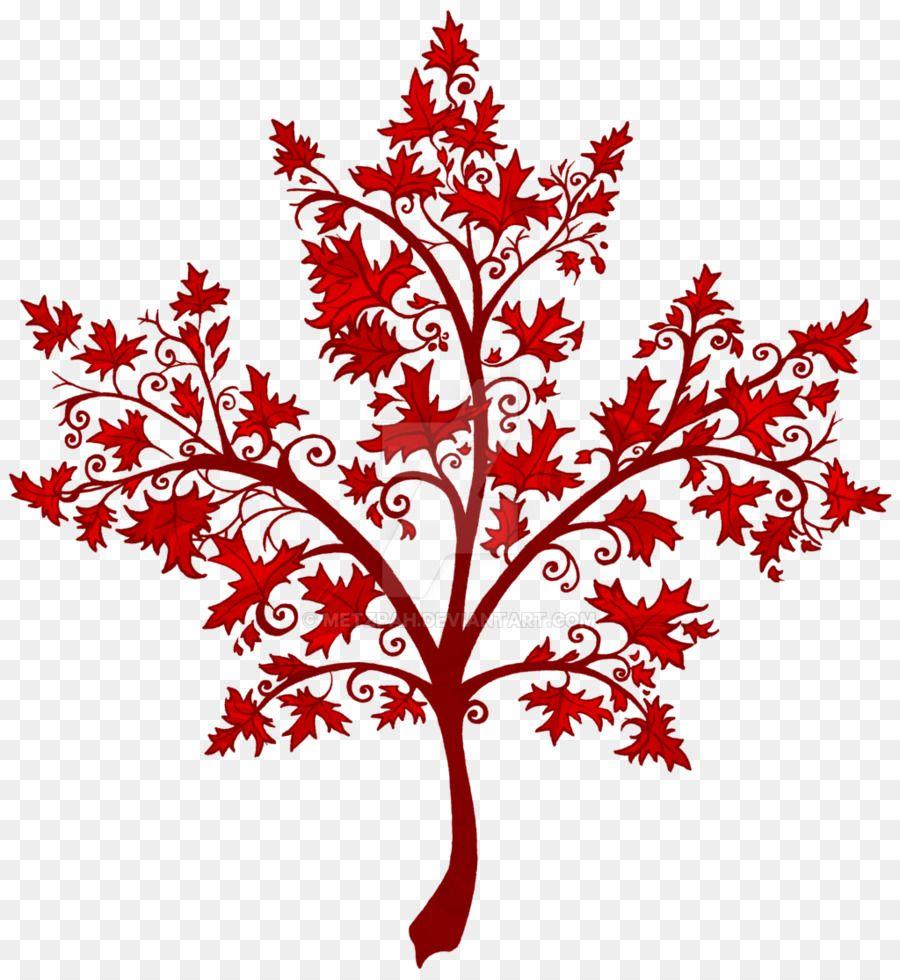 Maple Leaf Twig Canada Japanese Maple Maple Tree Maple Leaf Japanese Maple Maple Tree