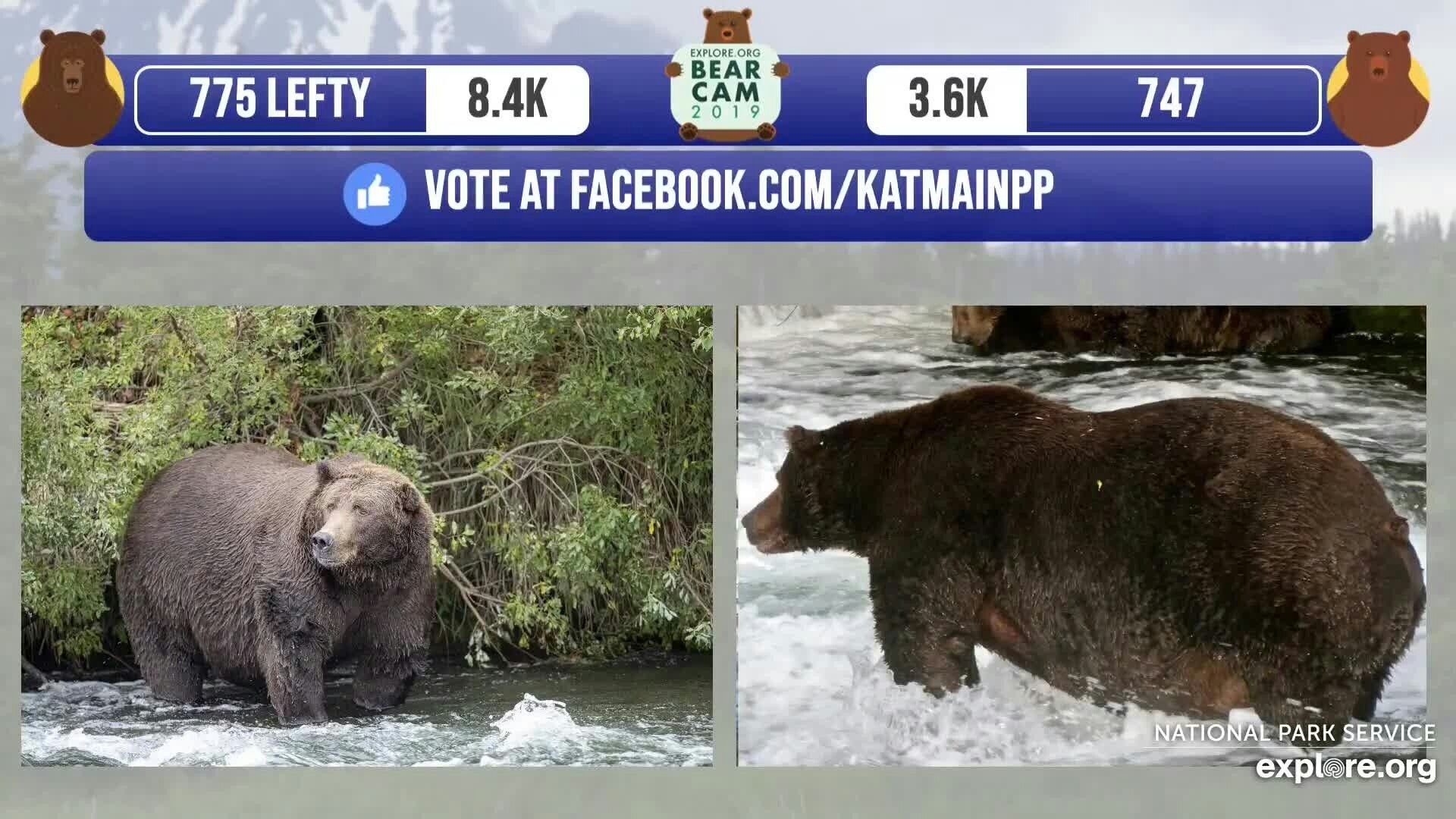 Pin on Bears In The Katmai