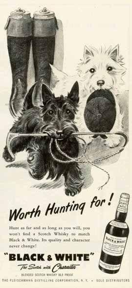 Chiens Whisky Black White Publicité Vintage 1955 Scottie Dog Westies Scottish Terrier