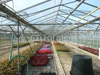 Gewachshaus Mit Schlauch Und Bunten Blumen In Einer Gartnerei In Frankfurt Am Main Oberrad In Hessen Gewachs Gewachshaus Bunte Blumen