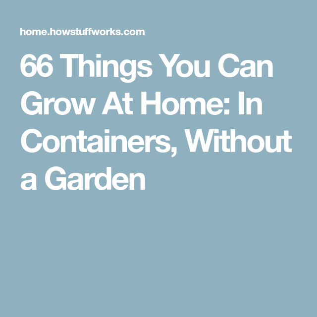 66 Things You Can Grow At Home: In Containers, Without A