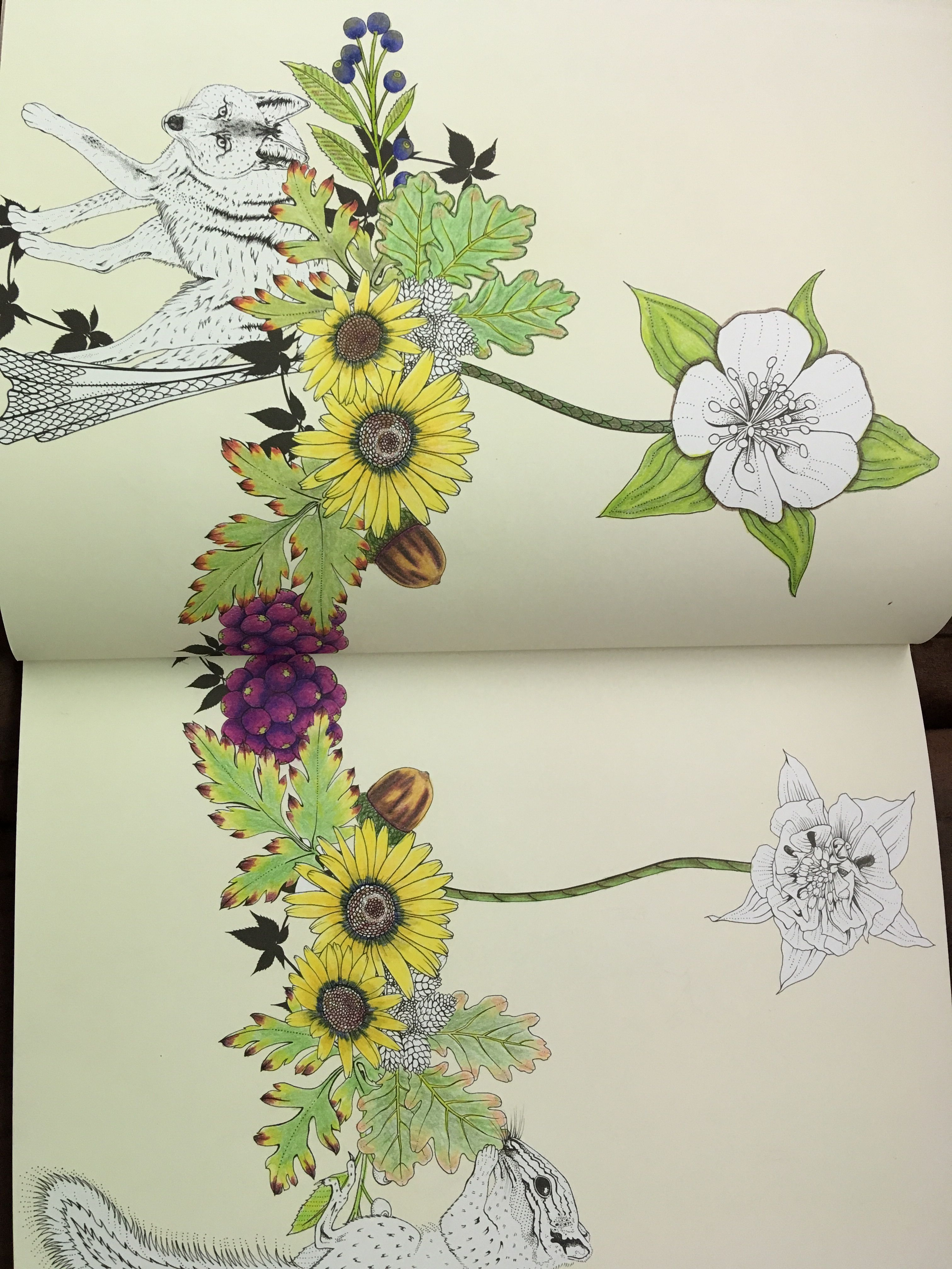 Into The Wild Ukrainian Art Drawings Coloring Books