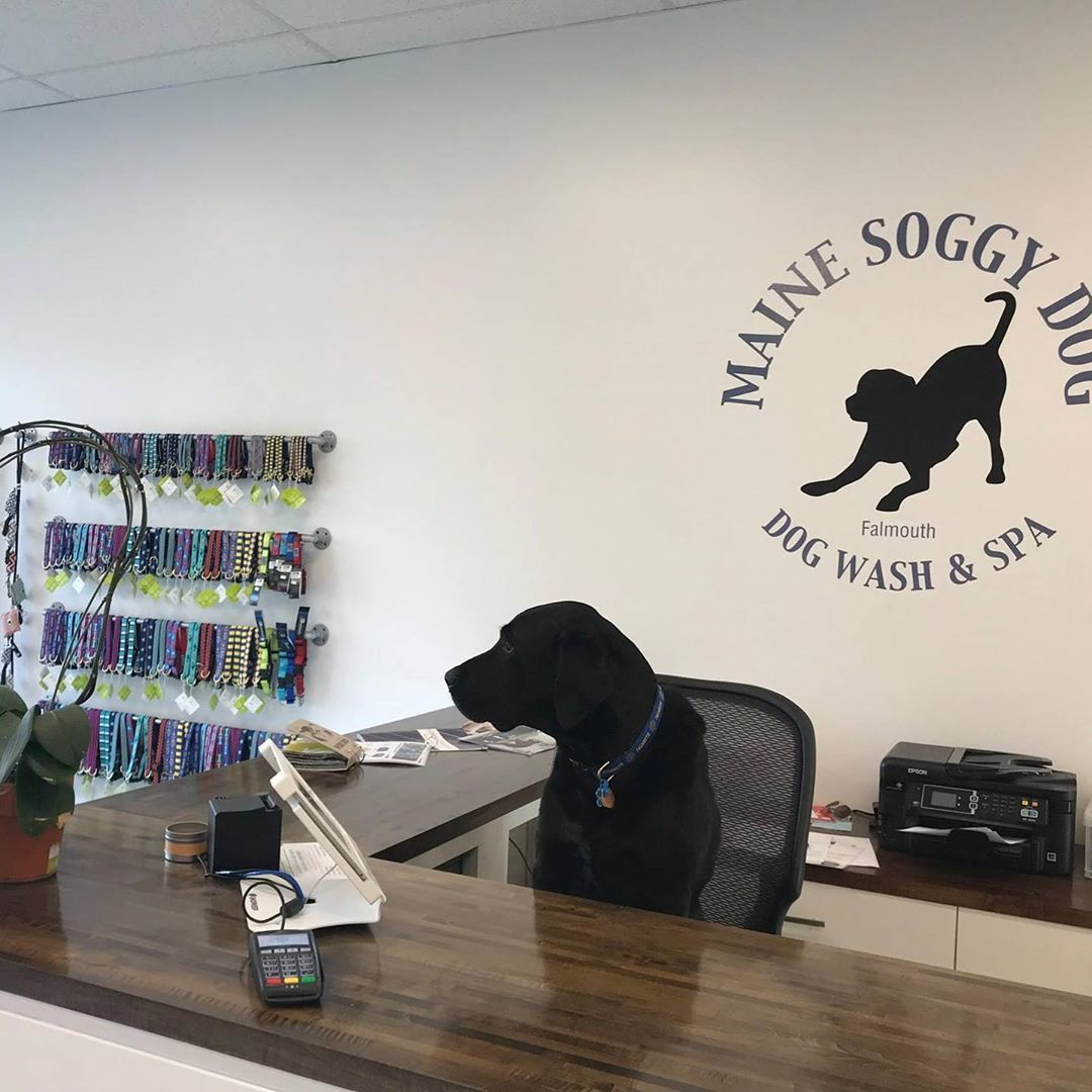 Casco Needs A Break From Running The Front Desk Here At Maine Soggy Dog If You Know Of Anybody Looking For A Part Time Job 1 Dogs With Jobs Dog Wash
