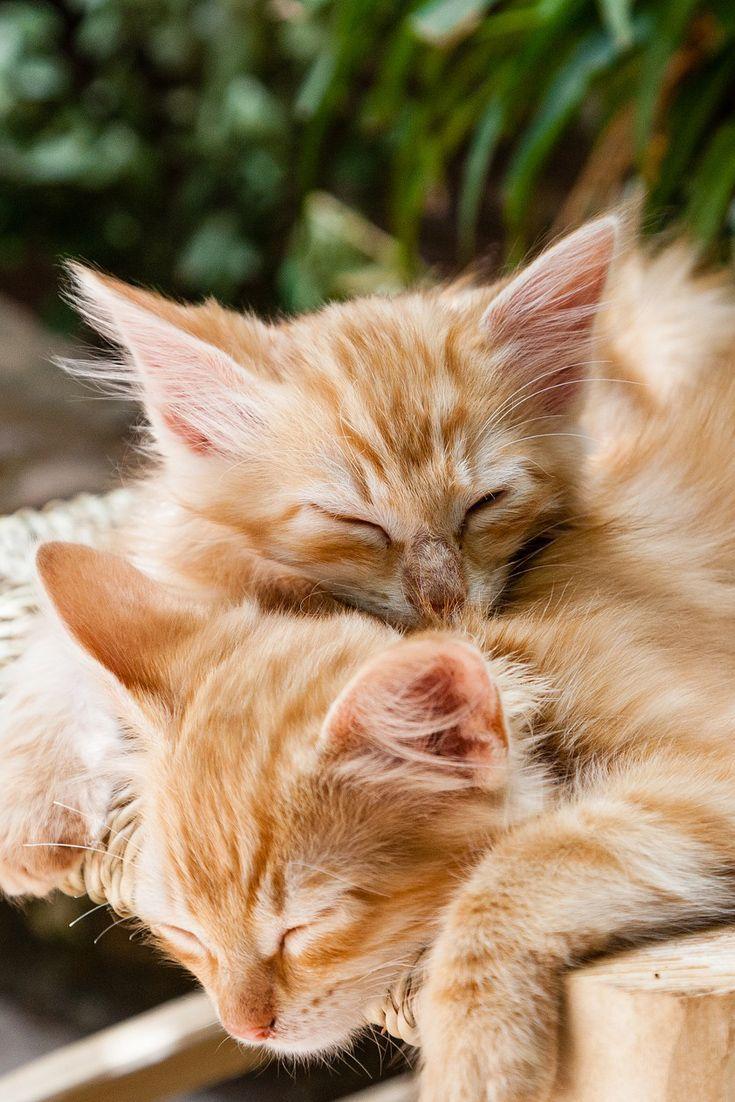 Cute kittens are sleeping cute kitten cat sleep