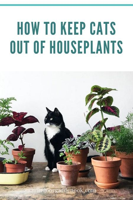 How To Keep Cats Out Of Houseplants | Indoor Garden Nook