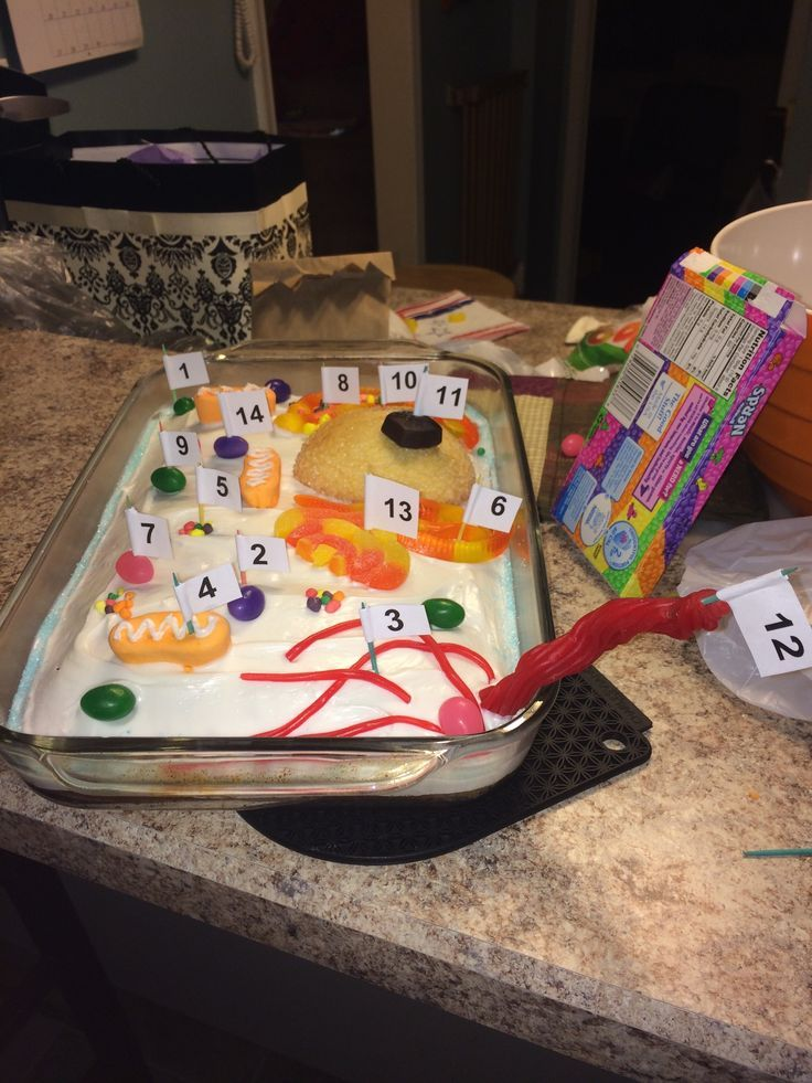 animal cell edible project 3-d cell model project (100 points) project assigned: (plant cell) or (animal cell) project due: thursday,  - project may be edible but,.
