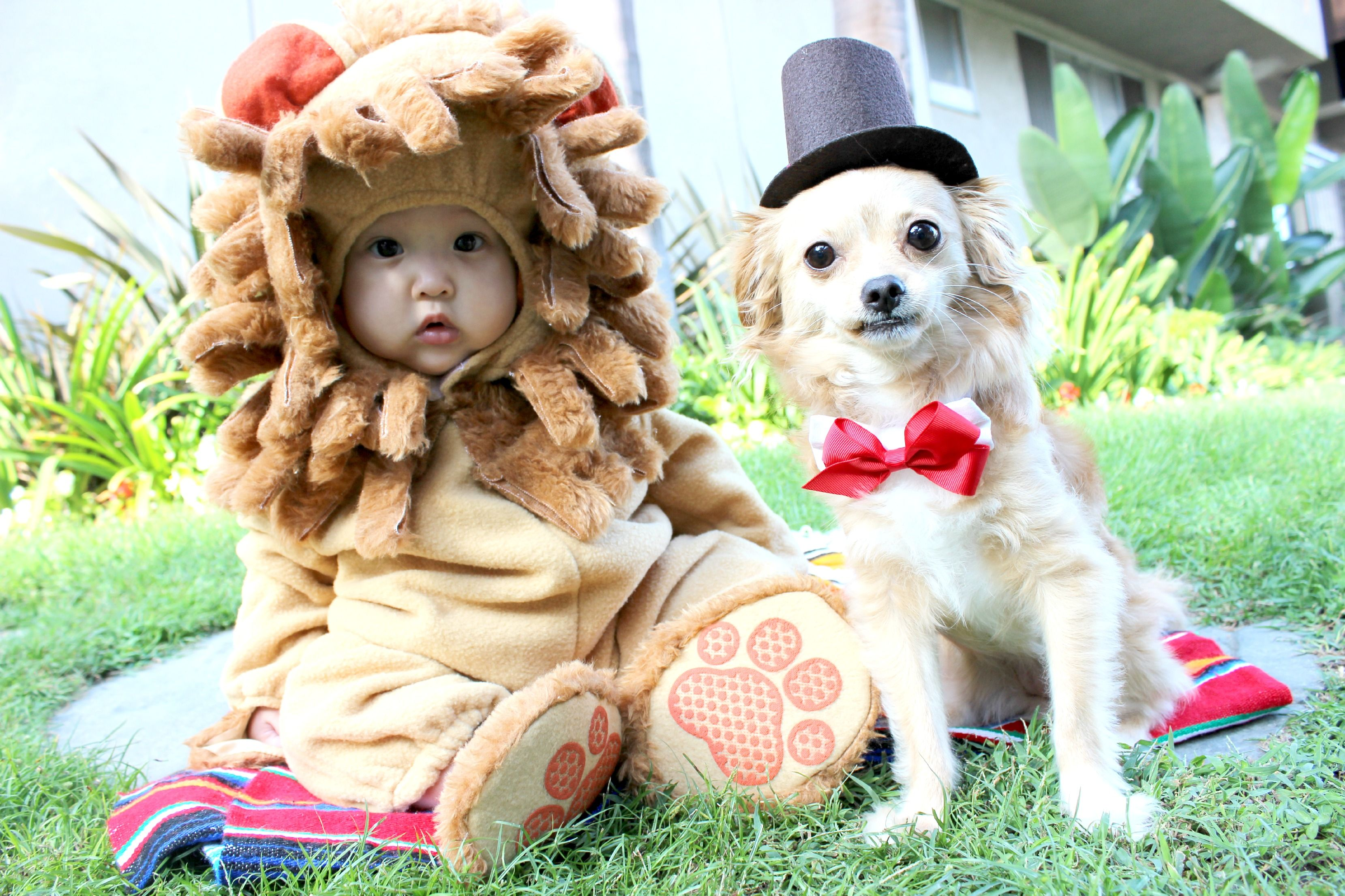 Matching Halloween Costumes For Dogs And Kids Dog Halloween