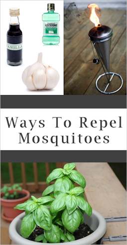 Scram Skeeters! How to Fight Off Drive Away Mosquitoes in