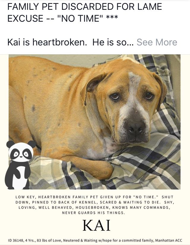 Pin on Adopt, rescue, Foster help save a life