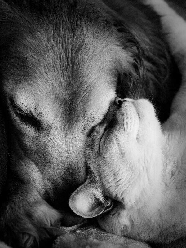 Картинки с животными грустные про любовь