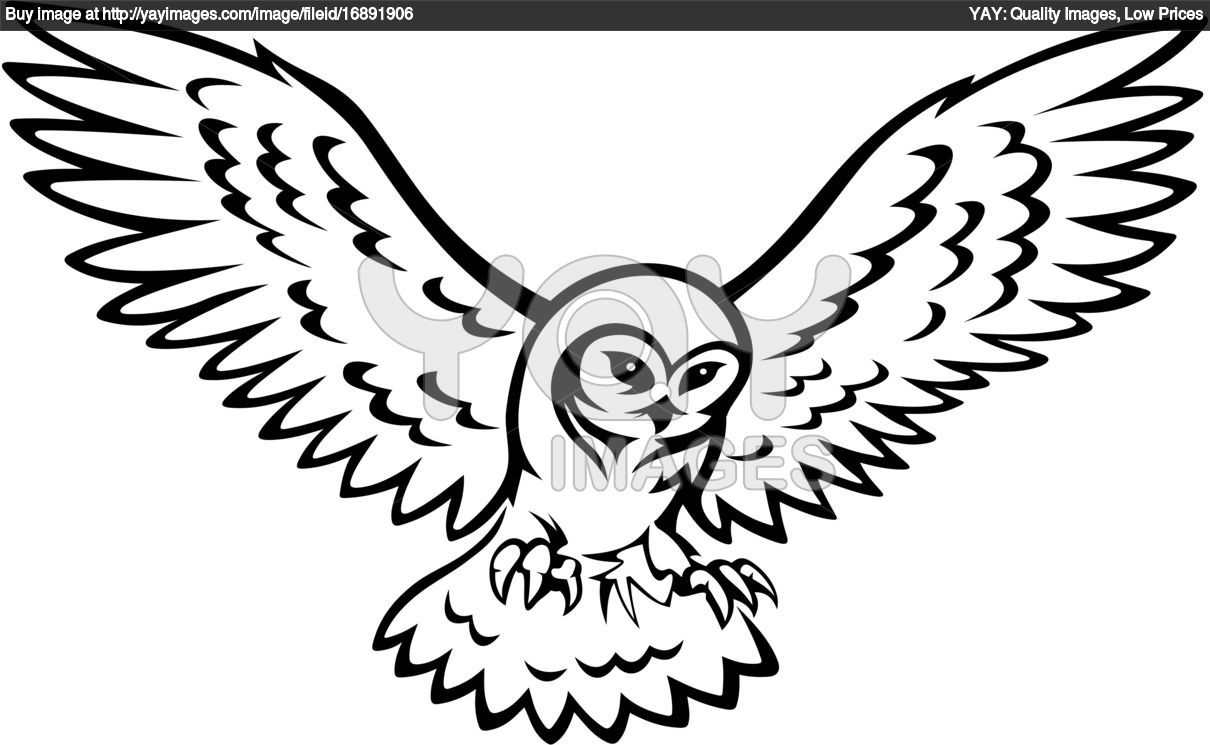 how to draw flying owls - Google Search | Owls drawing ...