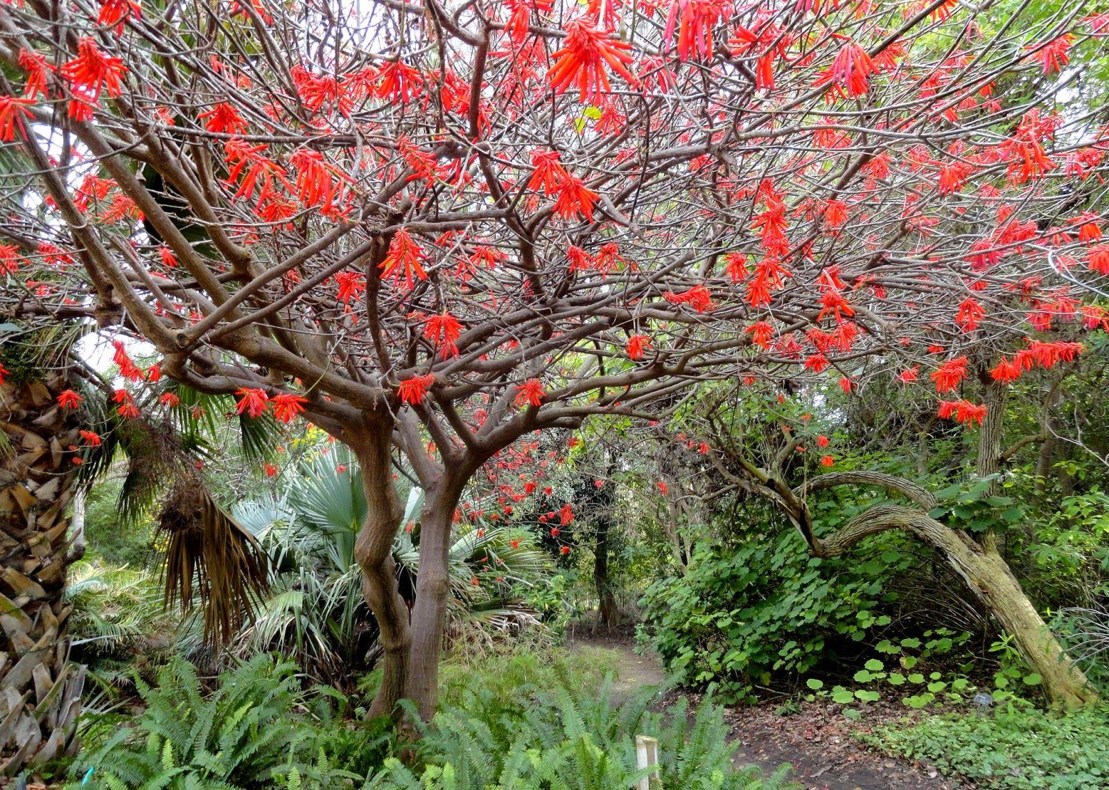 cd222ee474b5adba057d896822814f3d - San Diego Botanical Gardens Free Tuesday