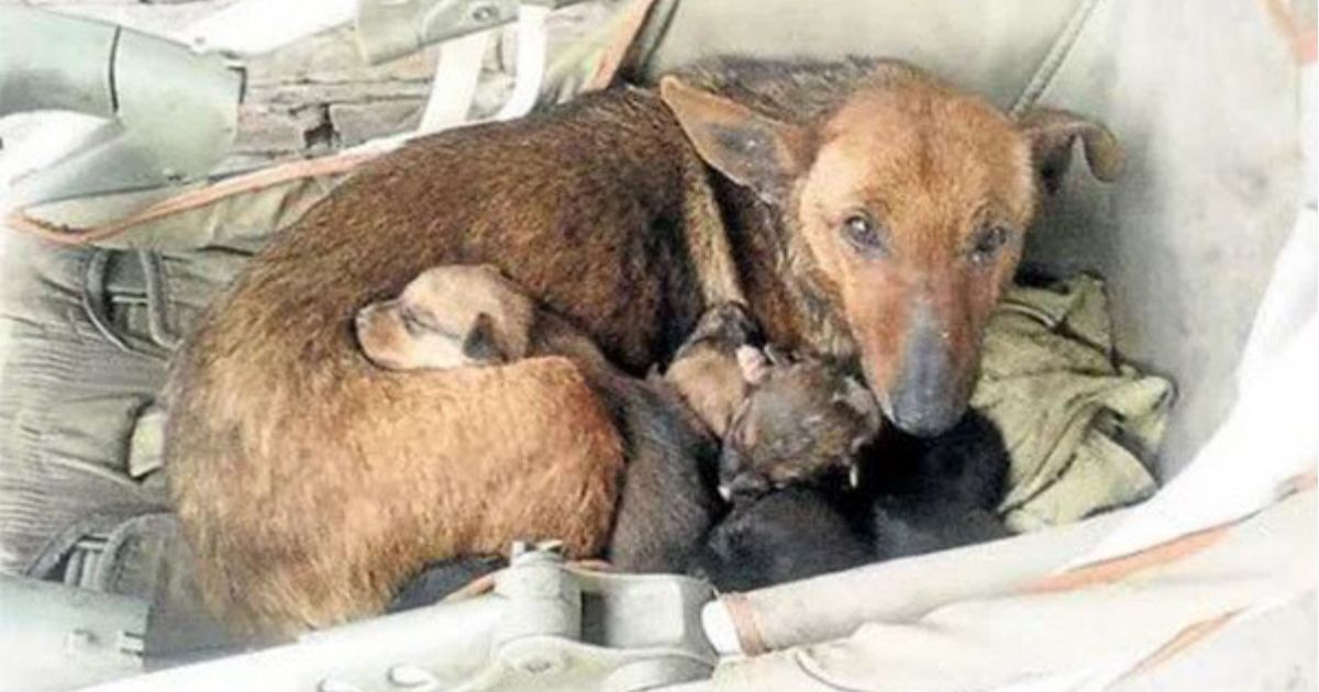 Woman Finds Street Dog With Her Puppies, Looks Closer And