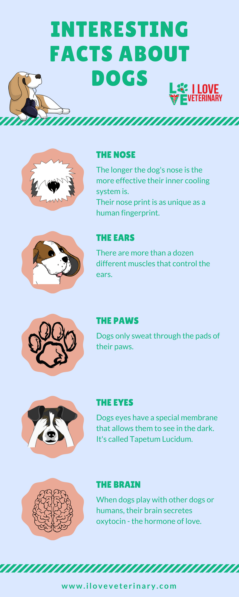 Interesting Facts About Dogs I Love Veterinary Dog Facts Dog