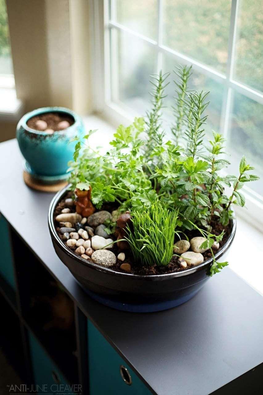 How to Make an Amazing DIY Indoor Cat Garden | Cat garden, Indoor ...