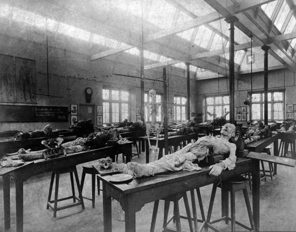 The Dissection Room