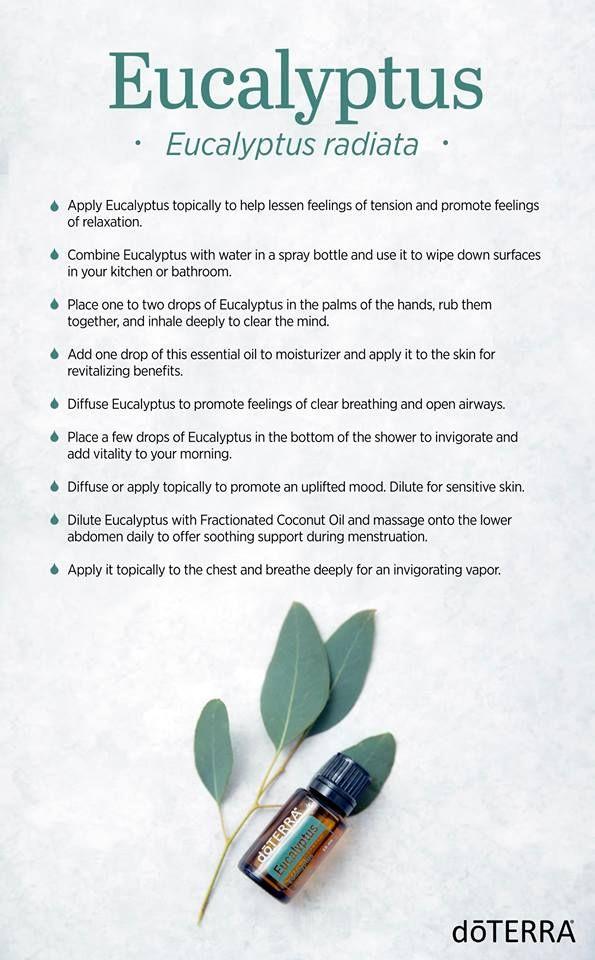 Pin On Essential Oil Eucalyptus