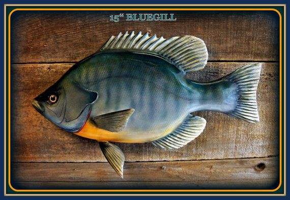 16 inch Bluegill relief wood carving wall mount by WOODNARTS, $125.00