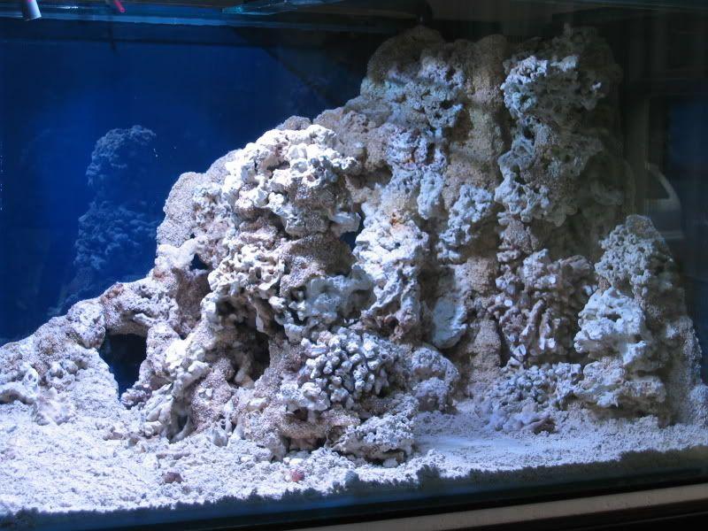 Foam Live Rock Commbo Page 4 Reef Central Online Community Live Rock Coral Reef Aquarium Rock Textures