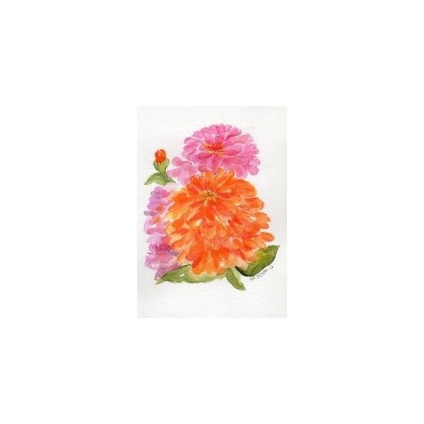 Popular Zinnias watercolors paintings original Zinnia ART Orange Pink and Purple Zinnias small colorful floral art SharonFosterArt floral Amazing - Simple orange flower painting Amazing