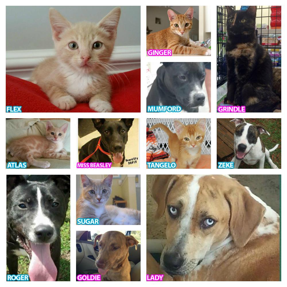 Pin on Pet Adoption in St Augustine, FL