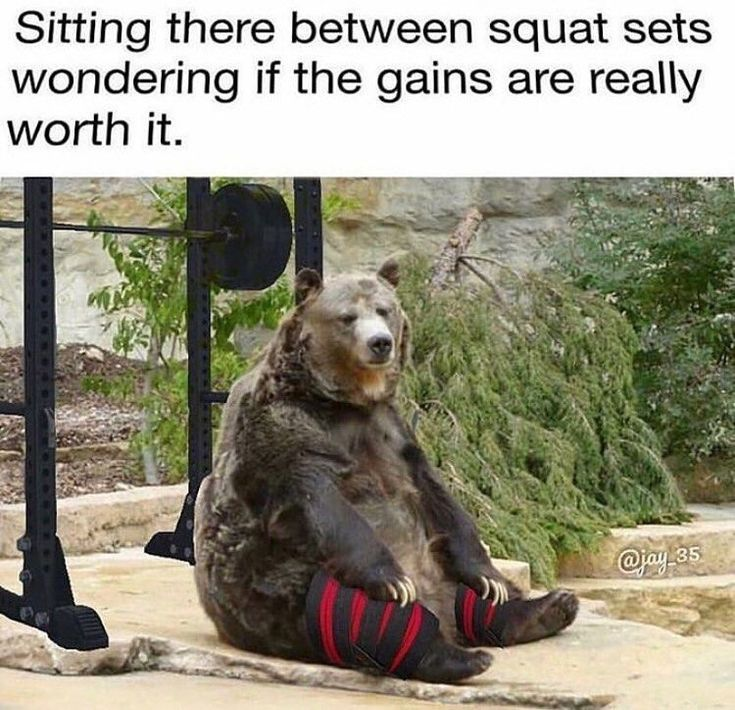 """#fitfam  #squats  #muscle…"""" -  Gym And Fitness Memes on Instagram: """"I felt this one? ➖➖➖➖➖➖➖➖➖➖➖➖ �..."""