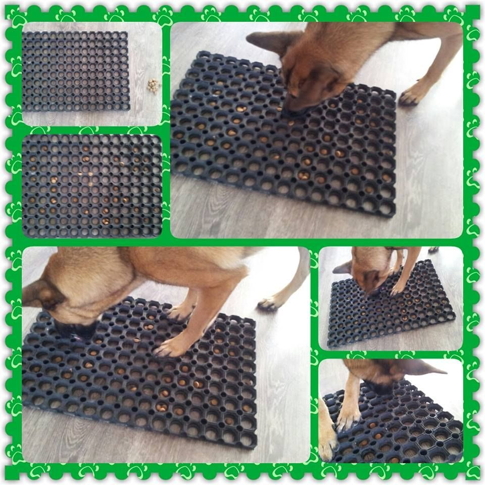 Plastic Mat With Holes Put Treat Inside Them And You Got A Dog Toy