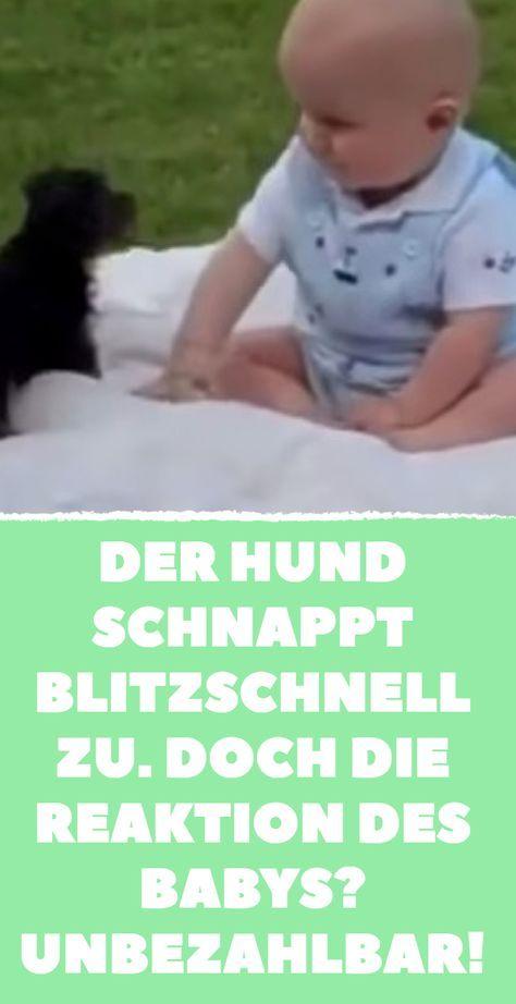 Der Hund schnappt blitzschnell zu. Doch die Reaktion des Babys? Unbezahlbar! #whatkindofdog
