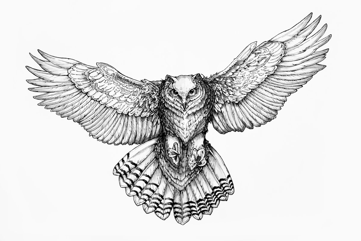 Owl Line Drawing Tattoo : Owl drawing google search room decor pinterest