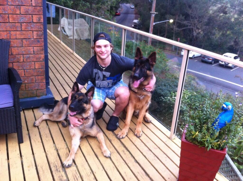 Hockey player Nathan Walker & his GSDs Akira & Bailey