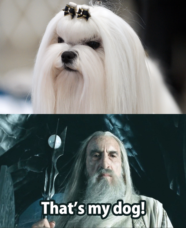 This Dog Really Kills Me The Hobbit Lotr Funny Animals