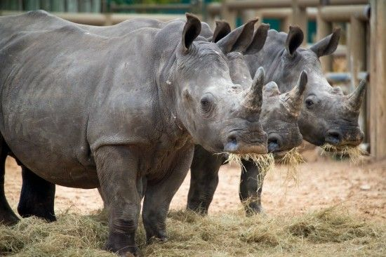 Cinco de Rhino at the Houston Zoo!